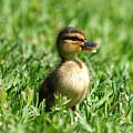 Happy Lil Duck by Kala King