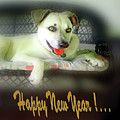 Happy New Year Art 2 by Miss Pet Sitter