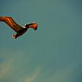 Happy Pelican  by Susanne Van Hulst