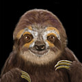 Happy Three Toe Sloth by Thomas J Herring