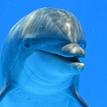 Happy Smiling Dolphin by Richard Bryce and Family