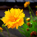 Happy Spring Flower by Emily Spivy