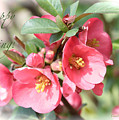 Happy Spring Flowering Quince Card And Poster by Carol Groenen