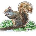 Happy Squirrel  by Irina Sztukowski