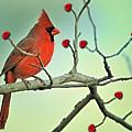 Happy Valentine's Day by Bonnie Barry