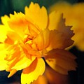 Happy Yellow Flower by Debra Lynch