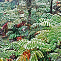 Hapu'u Fern Rainforest by Lydia Holly