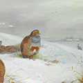 Hard Times Partridges By Thorburn by Archibald Thorburn