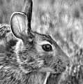 Hare by Jamieson Brown