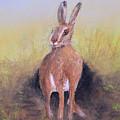 Hare by Ken Figurski