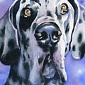 Harlequin Great Dane by David Rogers