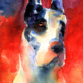 Harlequin Great Dane Watercolor Painting by Svetlana Novikova