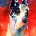 Harlequin Great Dane Watercolor Painting by Svetlana Novikova