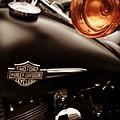 Harley by Carlton Boyce