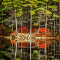 Harold Parker State Park In The Fall by Pat Lucas