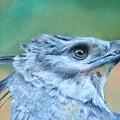 Harpy Eagle Two by Ceci Watson