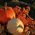 Harvest Colors by Sandra Cunningham