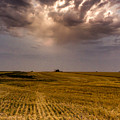 Harvest by Jay Stockhaus