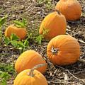 Harvest Lineup by Christi Kraft