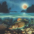 Harvest Moon Walleye 3 Extended Version by Jon Wright