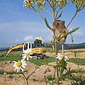 Harvest Mouse And Backhoe by Jean-Louis Klein & Marie-Luce Hubert