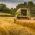 Harvest Time by Andrew Henning