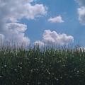 Harvest Time by Bc Adamkowski