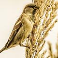 Harvest Time Iv by Trent Garverick