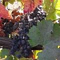 Harvest Time by Nancy Atherton Cheadle