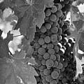 Harvest Time by Nancy Ingersoll