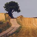 Harvest Time by Wedigo Ferchland