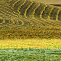 Harvested Fields Of The Palouse by Sandra Bronstein
