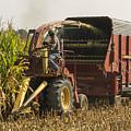 Harvesting by Johnnie Nicholson