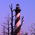Hatteras Light And Tree by Al Powell Photography USA