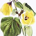 Hau Flower Art by Hawaiian Legacy Archive - Printscapes