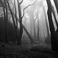 Haunted Woods by Jorge Maia