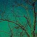 Haunting Tree  by Belle T Broskie