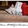 Have A Purrfect Christmas by Traci Cottingham