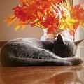 Have A Restful Thanksgiving by Jennifer E Doll
