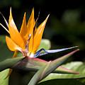 Hawaii Flora 13 by Charlie Osborn