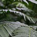 Hawaii Green by Michael Scott