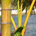 Hawaii by Kathryn Carlin