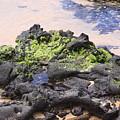 Hawaii Lava Rocks Coast by Robin Maria Pedrero