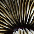 Hawaii Mushroom Coral by Ed Robinson - Printscapes