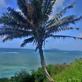 Hawaii Palm by Tanya Reavis