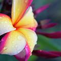 Hawaii Plumeria Flower Jewels by Sharon Mau