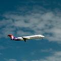Hawaiian Airlines Inbound by E Faithe Lester