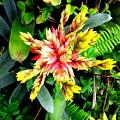 Hawaiian Beauty 3 by Randall Weidner