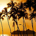 Hawaiian  Cruise by Athala Carole Bruckner