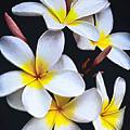Hawaiian Dreaming by David Millenheft